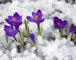 24.02.16 Добро пожаловать, Весна!